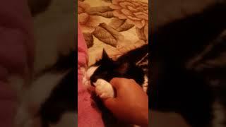 Смотреть всем!кот скучает по мамкиной сиське