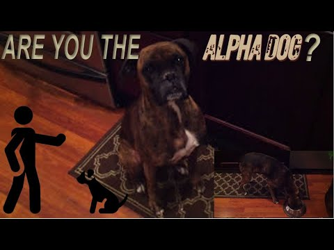 How To Test If Your Dog Knows You're Boss | Are You The Alpha?