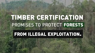 Making timber certification work for local markets