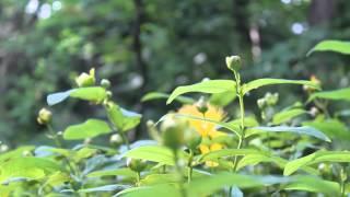 il campeggio Funivia del Gran Sasso - un giardino in diretta