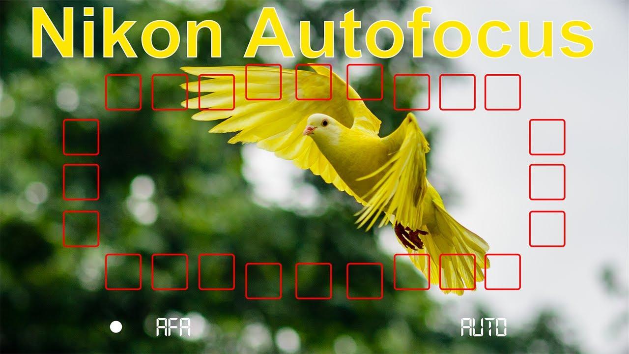 Chế độ lấy nét máy ảnh Nikon