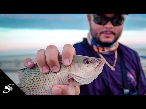 How To CATCH Snapper At The SKYWAY State Fishing Pier!