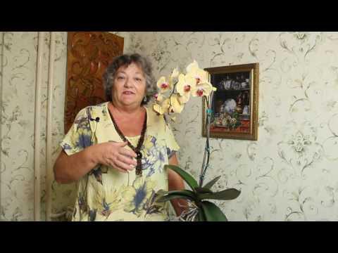 Орхидея Как Ухаживать За Орхидеей Фаленопсис Успешный Опыт Орхидея Уход