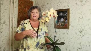 Как ухаживать за орхидеей чтобы она цвела много лет(Как ухаживать за орхидеей чтобы цвела много лет., 2016-08-24T19:08:25.000Z)