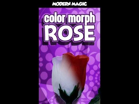 COLOR MORPH ROSE MODERN - DAYTONA MAGIC