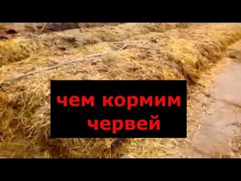 Разведение червей. Подготовка корма для вермифермы.