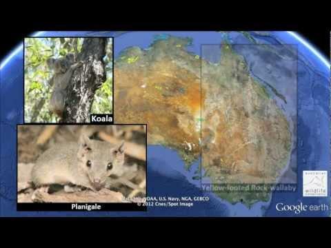 AWC Sanctuaries: Saving Australia's Wildlife