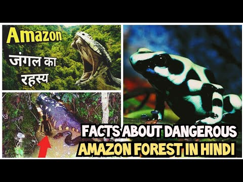 Facts About Amazon Forest In Hindi | Knowledge Crowd |