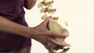 Proper Posture for a Healthy Spine