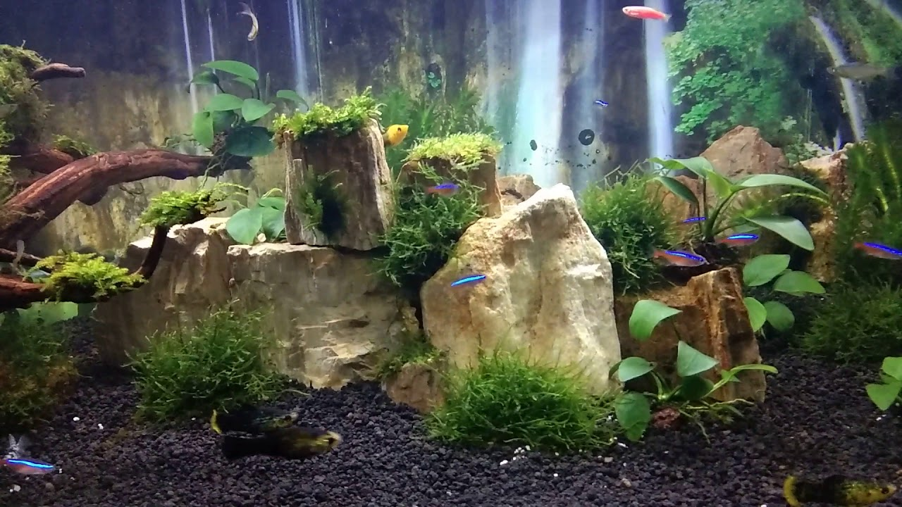 Aquascape Batu Fosil Akar Rasamala Youtube