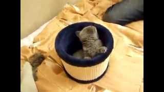 Кошка борется с потоком воздуха / Cat fights with the air flow