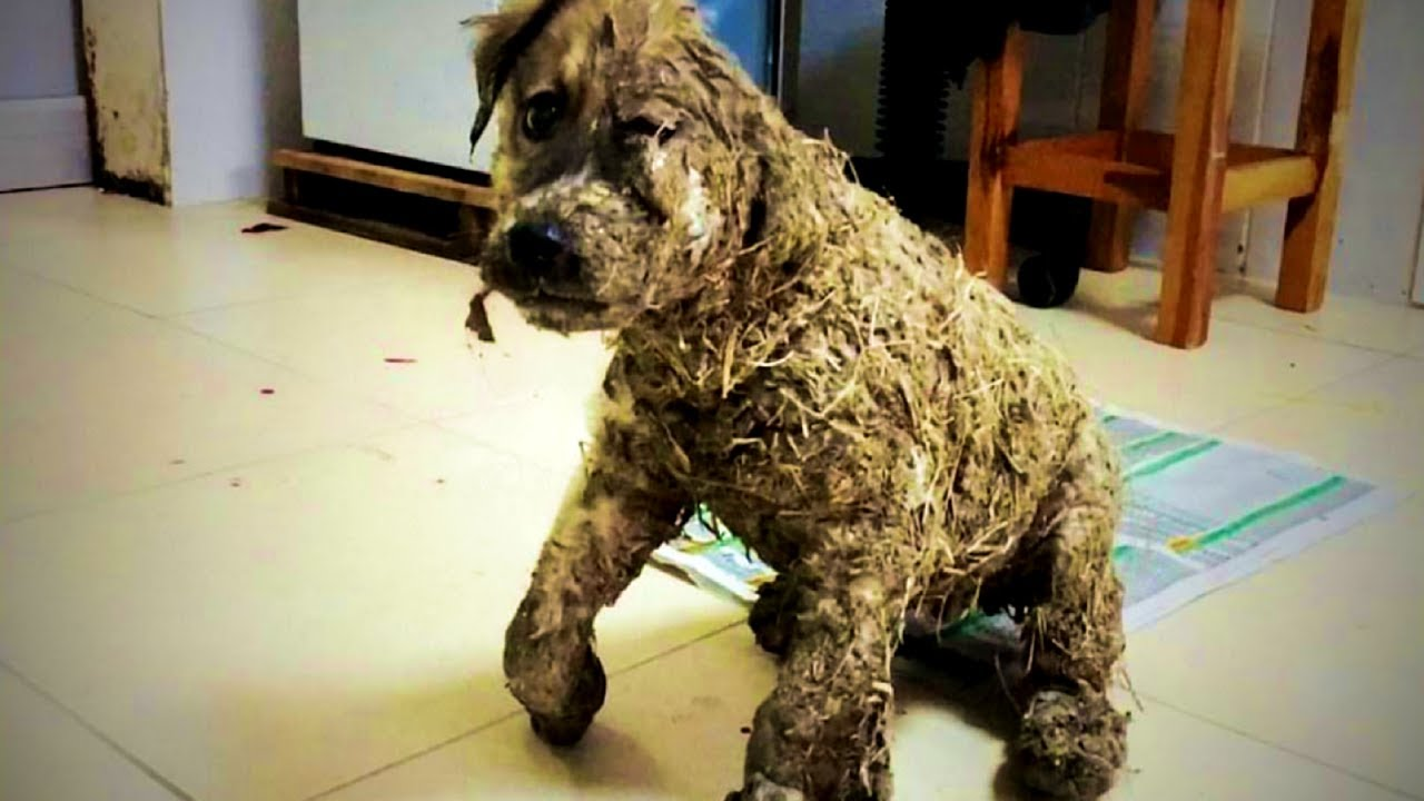 Rescue 4 Months Old Puppy Endures Intolerable Cruelty At The Hands Of Human