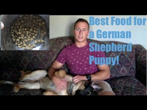 Best Food For A German Shepherd Puppy