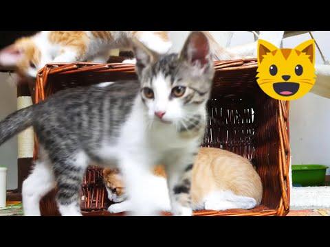 Kittens intimate tango 4k UHD 🐈 🐱 (Royalty free music YouTube audio)