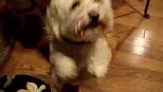 Spencer the Handjob dog