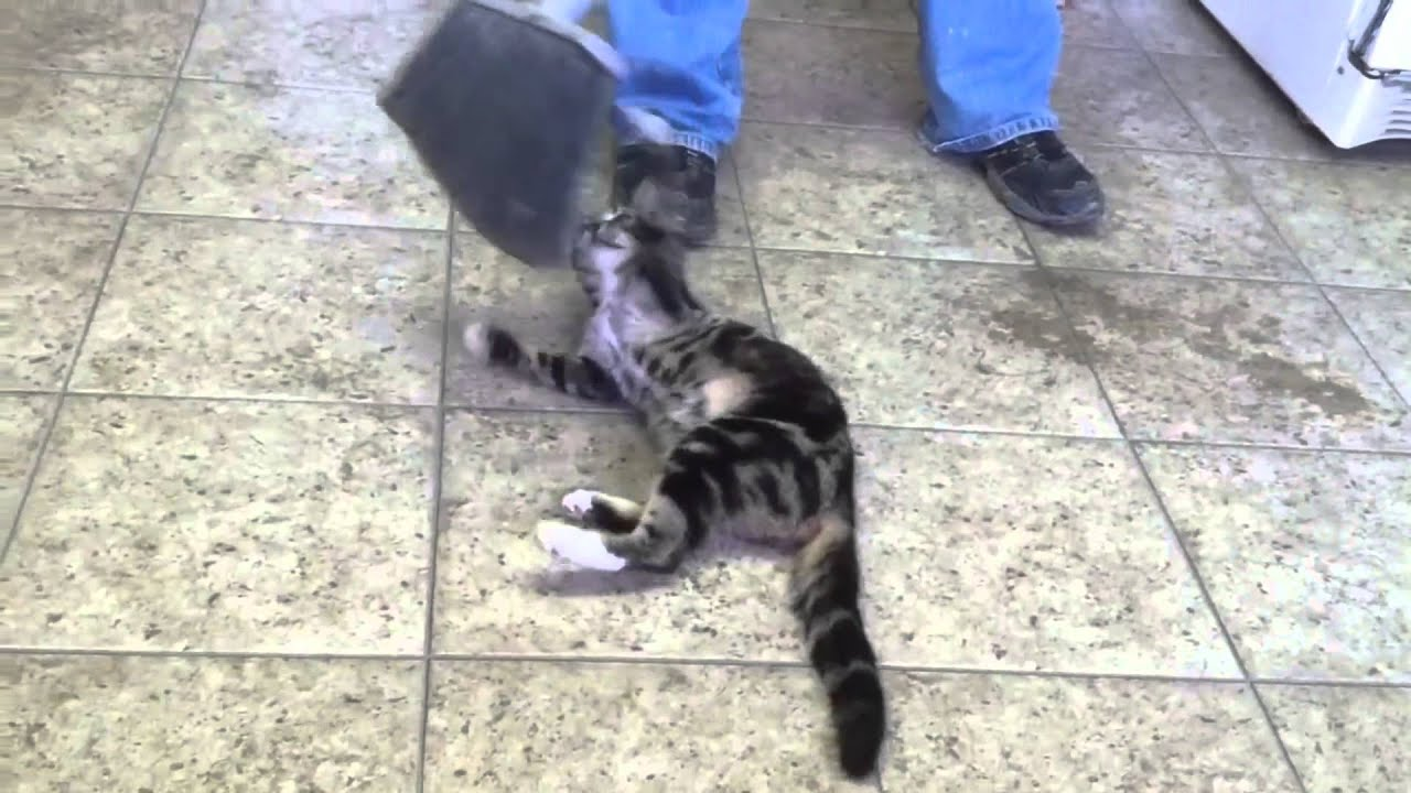 Cats Attack Compilation! Epic Funny Cat Video