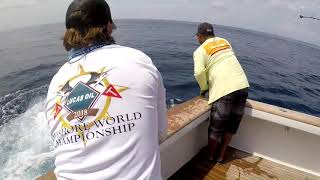 2018 Offshore World Championship | Mauritius Int'l Billfish Release Tournment | Pacific Sailfish