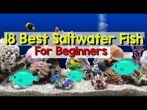 18 Best Saltwater Aquarium Fish For Beginners