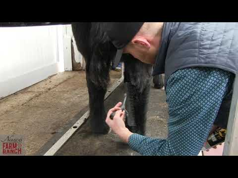 Complete Beef Cattle Fitting Tips From Nasco & CD Show Cattle