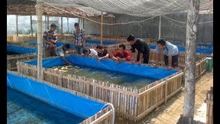 Bisnis Ikan Koalm Terpal Yang Menguntungkan