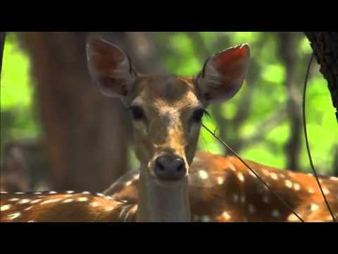 Картинки про тайну дикой природы