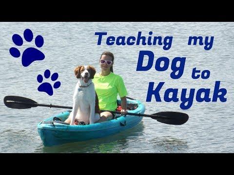 Teaching my dog to kayak!