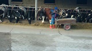 ☆Produkcja mleka, czyli codzienne obowiązki u vvictoiy☆