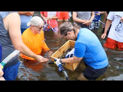 Excavating Quadrats To Sample Freshwater Mussels