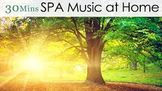 ★30 Mins★ SPA Music at Home - Breath of the Forest (Relaxation Instrumental Piano Music)
