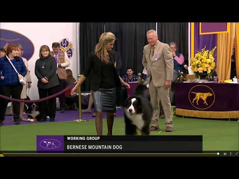 Westminster2018_BMD_part1