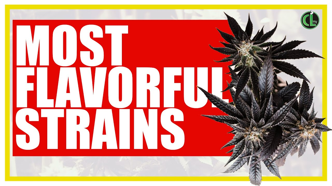 10 Best Tasting Cannabis Strains to Grow Right Now