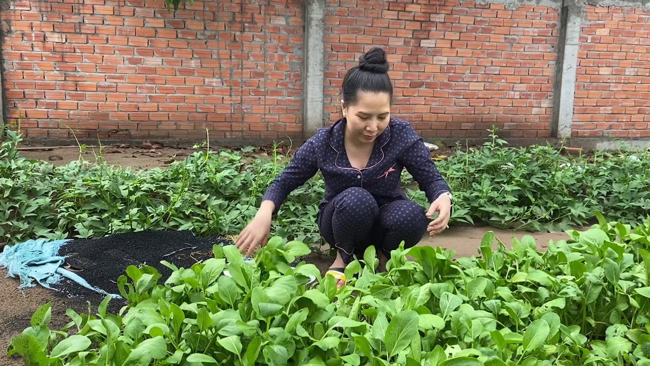 NSUT Thu Vân thu hoạch rau sạch trồng tại nhà sau mùa dịch nè cả nhà ơi!!!