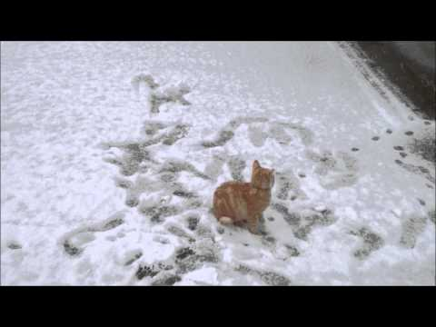 Two kittens playing for the first time in the snow