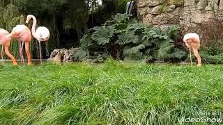 Zwierzęta w Dudley Zoo