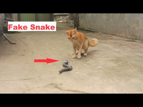 Cats are so funny you will die laughing - Funny cat VS Fake Snake Prank !
