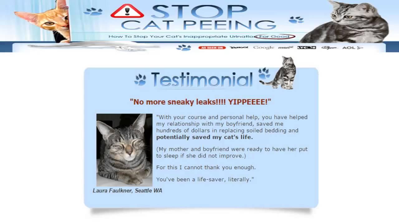 Cat Pooping Outside Litter Box