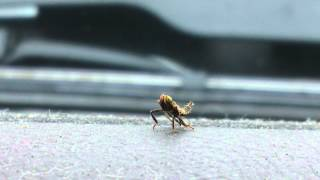 Download Video An insect challenged me to a dance off.  When I refused, it attacked. MP3 3GP MP4
