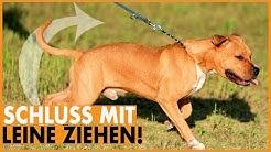 Leinenführigkeit trainieren / Dem Hund das Ziehen an der Leine abgewöhnen / Einfach und effektiv