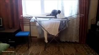 Кот Тимоша.  Пушистый помощник по хозяйству