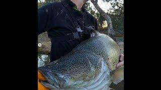 Trolling Meter Murray cod on light 6kg Redfin setup