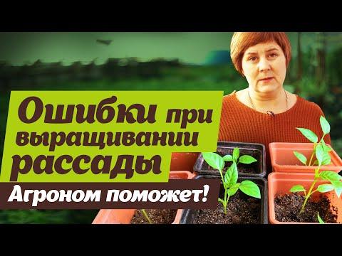 Ошибки при выращивании рассады  Советы агронома