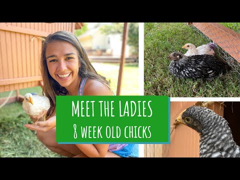 Meet My Backyard Chicken Flock // How To Set Up The Chicken Coop // 8 Week Old Chicks