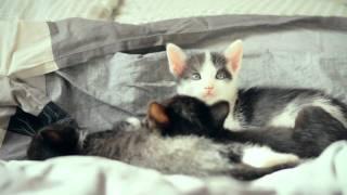 Отдам в хорошие руки милых котят