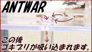 蟻戦争Ⅱ#9   【ゴキブリホイホイ】アリの狩りを観察してたら何故かゴキブリを生け捕りにする罠ができた。編~A cockroach trap~ thumbnail