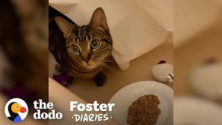 Scared Cat Slowly Warms Up To Foster Dad | The Dodo Foster Diaries