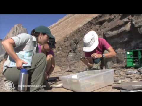 Burgess Shale Interpretive Hike - Yoho National Park
