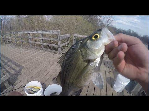 White bass fishing on the wolf river eureka youtube for White bass fishing