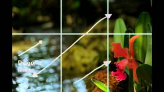 Photo Tips: Photography Composition  Rule of Thirds Technique By Crea8fotos