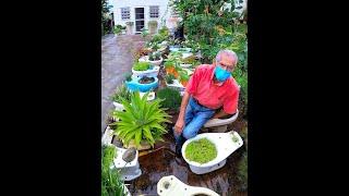 Don Pedro 🙏 y Su JARDIN de TOILETS 🚽 Mas de 60 Decoran su Casa 🥰 y Todos Sembrados 🇵🇷 Miren el 🍅 !