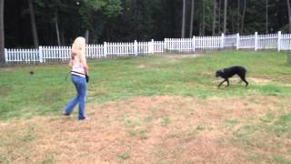 Whistle Train Your Dog
